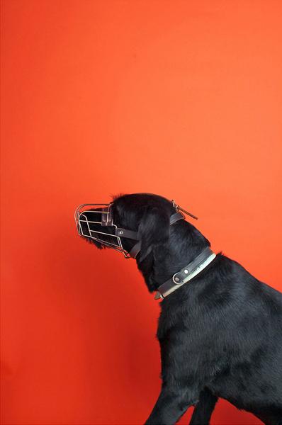 Black Dog with Orange Background